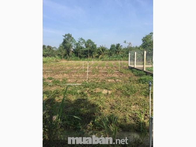 1,5 công đất vườn tại ấp Phước Hoà, xã Phước Thạnh, Mỹ Tho