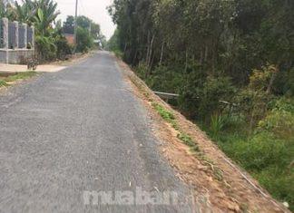 4,5hecta đường kênh Mới,khu phố 3,thị trấn Mỹ Phước,Tân Phước,TG