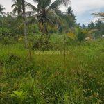 Bán 1000m2 đất vườn xã Phước Thạnh,Mỹ Tho Tiền Giang