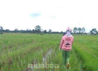 Chủ kẹt tiền bán nhanh đất lúa đang mần giá rẻ